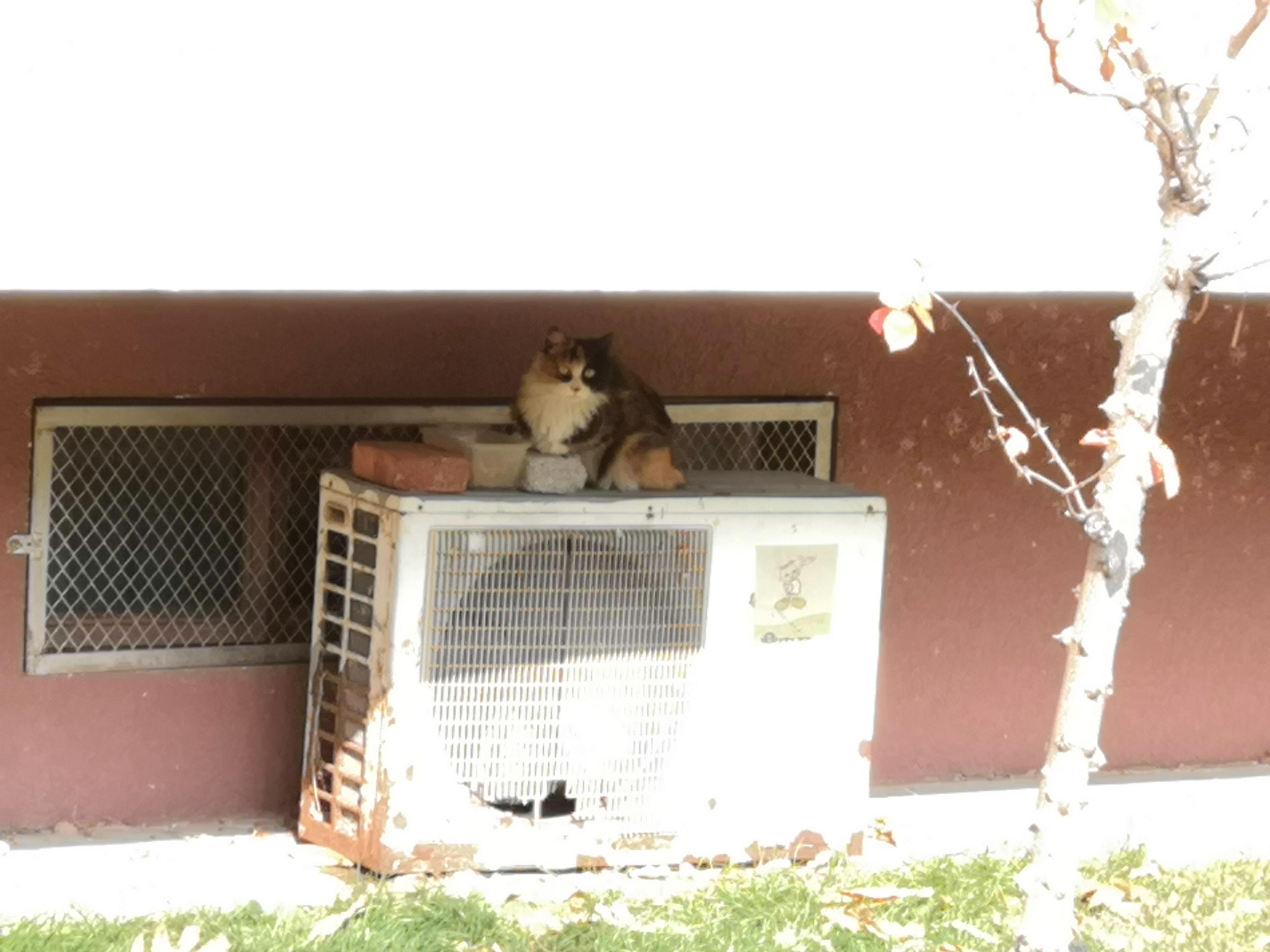 新的客人。小白那儿挺热闹,今天还看到一只狸花(大海参!!!)一只橘。